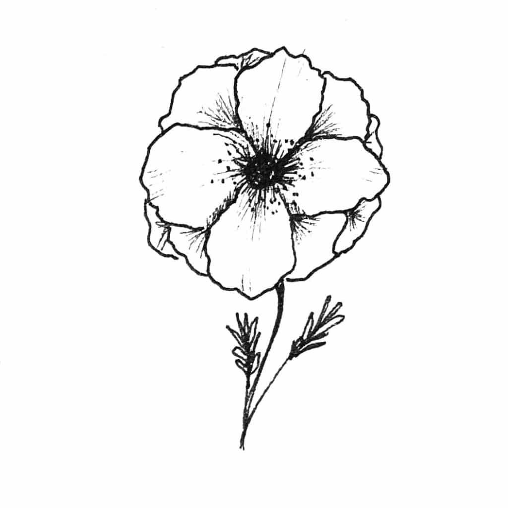Illustration Anemone