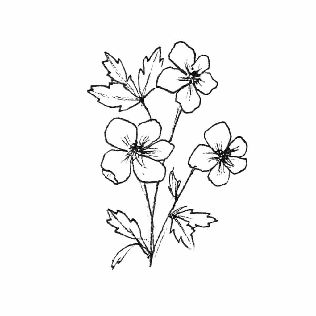 Illustration Butterblume