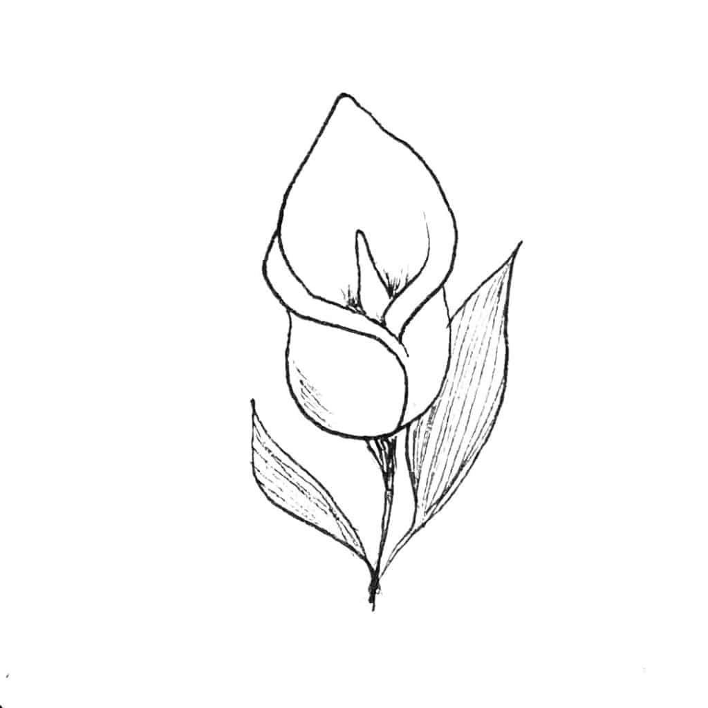Illustration Callas