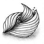 Zentangle Muster Meringue